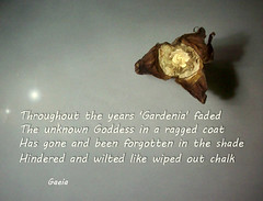 'Gardenia' as the song goes (gaeia) Tags: inspired iggypop gardenia song poem poetry words text verse thought gaeia vintage