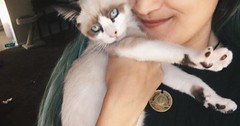 Maddie Isnt Feeling Well :( via http://ift.tt/29KELz0 (dozhub) Tags: cat kitty kitten cute funny aww adorable cats