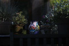 spotted (Elly Snel) Tags: tuin garden pot plant sunlight shadow schaduw zonlicht