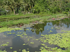DSC05309.jpg (J0celyn79) Tags: asie bali indonésie karangasem id