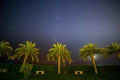 Night Sky (alewauk) Tags: samyang sonya7 stars dubai nature palmtrees night