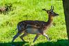 DSC_9540 (Costi Jacky) Tags: france naturereserve parcdemerlet
