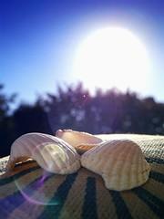 shiny.shells II (C.Kalk DigitaLPhotoS) Tags: muschel shell shells makro macro bokeh closeup stilllife still sonne sun sonnig sunny shiny sonnenschein sunshine reflection