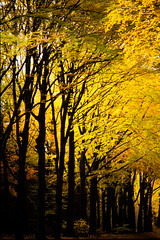Kootwijk Herfstbos 1 (antoonfotografie) Tags: forrest bos nederland netherlands gelderland kootwijk bossen