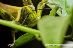 20121027-146 (ajakblackgoat) Tags: macro insect nikonmicro105mmf28 nikond700