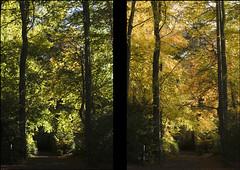 1st_8th Nov Marlay Park (Wendy:) Tags: autumn trees ireland diptych 70200mmf4l marlaypark