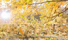 Project Autumn (1/2) ( SUMAYAH ) Tags: ca camera autumn sun canon project photography eos flickr edmonton explore alberta     550d     sumayah       flickrsumayah sumayahessa
