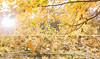 Project Autumn (1/2) (✿ SUMAYAH ©™) Tags: ca camera autumn sun canon project photography eos flickr edmonton explore alberta شمس شجرة بنات سنجاب 550d خريف فصل مصورين أشجار sumayah مصورات مبدعات بروجيكت فلكرسمية المصورةسمية سميةعيسى flickrsumayah sumayahessa
