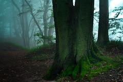 Møns Klint - 1 (marxstrip) Tags: cliff cold denmark darkness freddo scogliera foschia danimarca monsklint oscurita seleziona