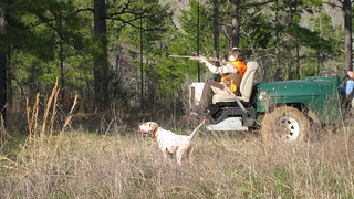 Alabama Quail Hunt - Davis Quail 26
