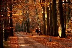 14nov12  wandelen in de Deldense bossen. (guus timpers) Tags: wandelen herfst geel rood zon stad herfstkleuren bruin zonlicht beuken delden bossen beukenlaan ambt herfsttinten deldense