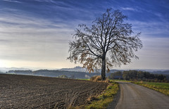 (the-father) Tags: autumn tree castle germany bavaria day cloudy leuchtenberg oberpfalz steinach blinkagain bestofblinkwinners blinksuperstars bestofsuperstars