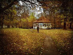 Carpet of leaves! (janetmeehan) Tags: morning autumn ireland dublin color colour fall leaves canon woodland landscape morninglight leaf woods cottage naturallight tearooms autumnscene phoenixpark dublinireland autumnlight fallscene natureportrait phoenixparkdublin