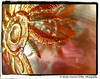 Textile#2 (Mickie Newton-Carline) Tags: macro texture yorkshire fujifilm textiles fujifinepix southyorkshire fujifilmfinepix womenphotographers macromondays ladyphotographers fujifinepixs5800 mygearandme ringexcellence