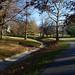 Fall Afternoon, November 10, 2012
