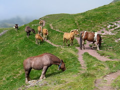 chevaux col d'ayous (cgeourjon) Tags: france cheval pyrenees ayous