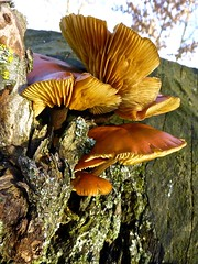 In the sun . (Fijgje [ Everything works so slowly ]) Tags: mushrooms fungus paddestoelen zwam zonneschijn fijgje mygearandme mygearandmepremium dec2012 panasonicdmctz30