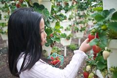 Strawberry Picker (arkworld) Tags: jessie strawberries strawberrypicking arkkid1