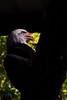 Bald Eagle (nycckynyc) Tags: bird animal animals zoo eagle baldeagle tamron processed a330 pheonix familytime pheonixzoo