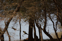 India-248 (johnmontague) Tags: india asia geography rajasthan nationalgeographic