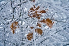 Leaves of gold (Uros P.hotography) Tags: trip travel trees winter lake snow cold tree tourism ice nature beautiful fog photoshop wonderful river frozen nice fantastic nikon perfect frost tour superb wildlife awesome famous freezing sigma tourist glorious slovenia journe