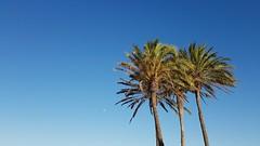 Palms and the sky (Quique CV) Tags: blue summer sky beach valencia azul palms spain playa palmeras cielo verano malvarrosa hss 2016