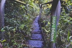 Stay Blazed (anthonyvillar) Tags: hawaii oahu hawaiian style haiku stairs stair way heaven paradise 808
