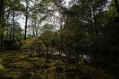 IMG_05251 (Francesc0 81) Tags: japanse tuin japansetuin denhaag thehague
