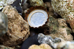 bottlecap (Forever Rambling) Tags: hawaii turtle beach oahu nikon tidepools