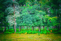 The Canopy (MacBeales) Tags: trees wood leaves trunks green hampshire new forest canon eos 70d