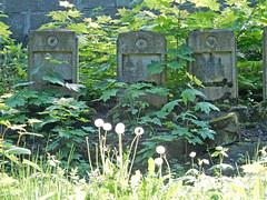 Jewish Soldiers' Graves (Antropoturista) Tags: poland krakau krakow cemetery necropolis grave tombstone soldier pusteblume lwenzahn pissenlit
