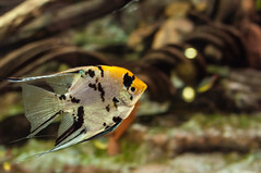 Acuario Agosto 2016 (53) (Fernando Soguero) Tags: acuario zaragoza acuariodezaragoza aragn turismo aquarium nikon d5000 fsoguero fernandosoguero