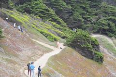 When Paths Cross (Tripawd) Tags: landsend goldengatenationalrecreationareacalifornia