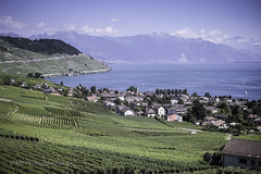 paradise found (mamuangsuk) Tags: paradisefound lavauxunescowhs grandvaux switzerland lacleman vignobledelavaux lavauxvineyards scenicview corniche scenicroad alps alpes greenandbluehues mamuangsuk