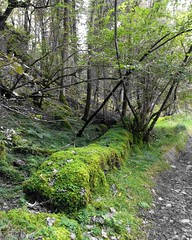 mossy wall (mistdog) Tags: moss wall path lakedistrict cumbria photoscapex