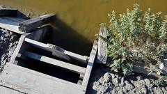 Recupero della Salina 5 (Nicola Armari) Tags: salina comaccio ferrara parco delta po