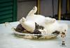 Rotolamenti (antonioscoletta) Tags: gatto animali felini rotolare estate giardino canon 1200d