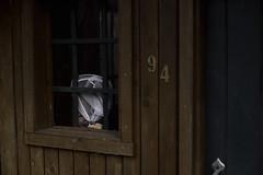 149/365 (J. Lee Syn) Tags: griswolds365 365 threesixtyfive jleesyn childhoodunplugged clickinmoms realmomtogs momtog letthekids letthembelittle subjectlight lightinspired findingthelightwitherinhensley followthislight vsco summer dearphotographer stillaboy kidsoftheoutdoors