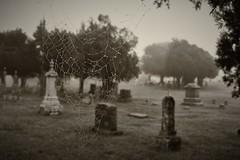 Cemetery Spiderwebs (slammerking) Tags: spiderwebs cobweb cemetery graveyard dew dewdrops fog creepy trees blackwhite bw monochrome gothic