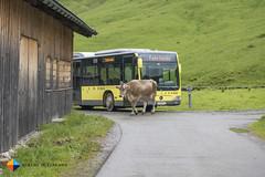Fahrtende (HendrikMorkel) Tags: austria bregenzerwald family sonyrx100iv vorarlberg sterreich mountains alps alpen berge