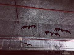 Carpark Bats (Looking Glass) Tags: bats collingwoodundergroundcarpark collingwood ifttt instagram