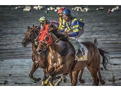 CARRERA CABALLOS SANLUCAR BARRAMEDA 2012 (pietroalge) Tags: horses espaa beach race caballos spain playa racing andalucia cadiz carrera