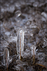Ice jacket (Eric the Nbi) Tags: winter plants cold color ice vir