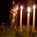 Pippa by Candlelight