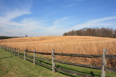 Raytharn Farm IV (Montgomery County Planning Commission) Tags: trust restoration ecological pennypack montgomerycountypa warmseasongrasses lowermorelandtownship raytharnfarm montgomerycountyopenspaceprogram