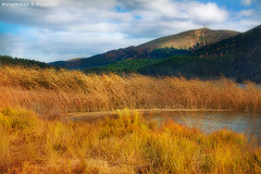 Autumn (Mohammad S AlJuhani  ) Tags: autumn turkey bolu abant