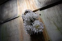 DEAD FLOWERS (Artretros) Tags: flowers light shadow urban dusty abandoned cemetery dark weird closed sad darkness ghost rusty down haunted creepy forgotten urbanexploration trespass horror dust exploration derelict crypt tombs decayed smells humidity ue urbex artretros