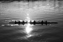 seven plus one (loop_oh) Tags: ocean roses blackandwhite bw usa west reflection water beer bike bicycle rose oregon america portland mirror book coast waves unitedstates pacific northwest spiegel bikes books pacificocean pacificnorthwest rowing pdx bier rosen amerika bridgetown schwarzweiss westcoast columbiagorge willametteriver welle fahrrad powells rower scullers rowers stumptown wellen rudern oarsman powellsbookstore sculler pazifik cityofroses oarsmen rosetestgarden ruderer reflekrion beertown beervana oldtownpacificnorthwest wasserwave