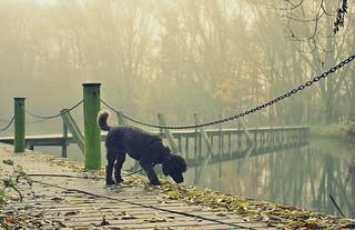 walking the dog... (explored #421)