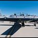 T-6A Texan II - '08-3917' - USAF used by Luftwaffe